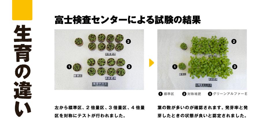 富士検査センターによる試験の結果 左から標準区、2倍量区、3倍量区、4倍量区を対称にテストが行われました。 葉の数が多いのが確認されます。発芽率と発芽したときの状態が良いと認定されました。