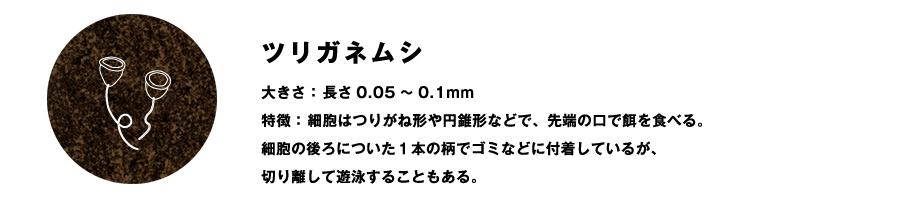 ツリガネムシ大きさ:長さ0.05~0.1mm 特徴:細胞はつりがね形や円錐形などで、先端の口で餌を食べる。 細胞の後ろについた1本の柄でゴミなどに付着しているが、 切り離して遊泳することもある。